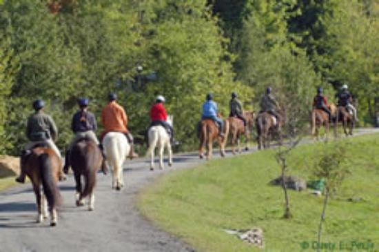 Vermont Icelandic Horse Farm Image