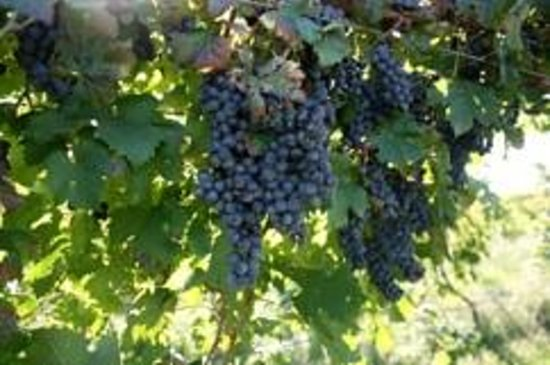 Keels Creek Winery