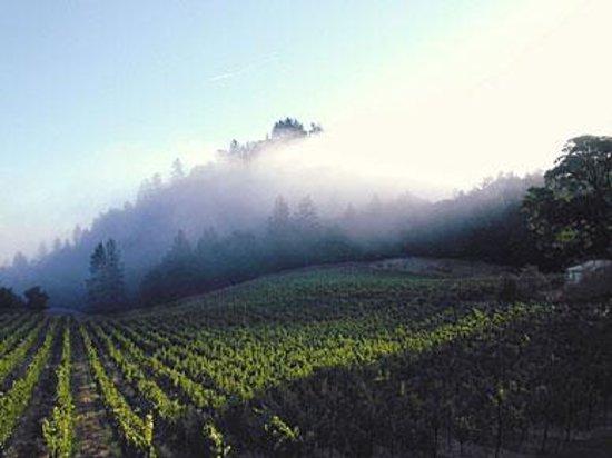 Robert Keenan Winery: Look at that fog!