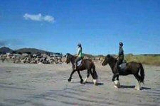 Long's Horse Riding