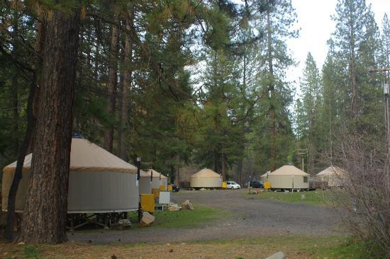 Yosemite Lakes RV Resort: View of River yurts at left and Meadow yurts at right