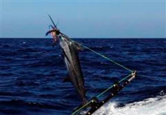 St Lucia Deep Sea Fishing Charters Foto