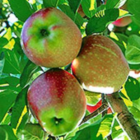 Maskar Orchards Photo