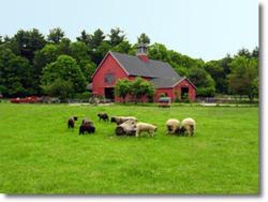 Drumlin Farm Wildlife Sanctuary
