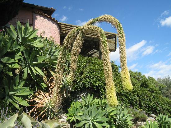 Villa Hanbury Picture Of Giardini Botanici Hanbury