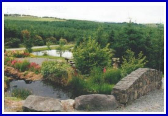 Millstreet Country Park: Features at the Park