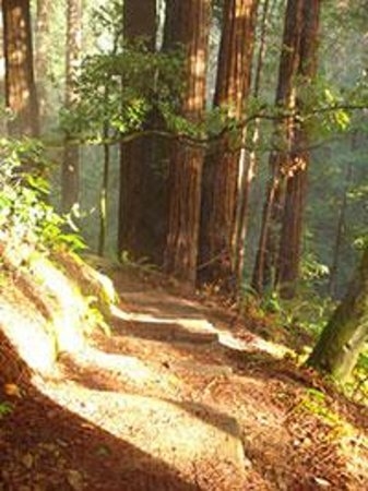 Tom's Muir Woods Walking Tours