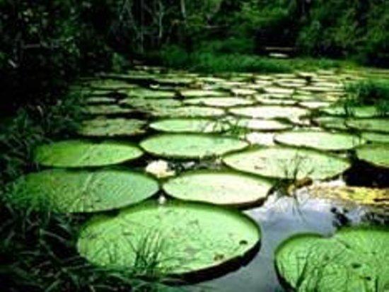 Kolombia: Amazonas, Colombia