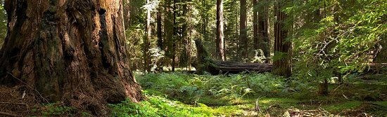 Montgomery Woods State Reserve Foto