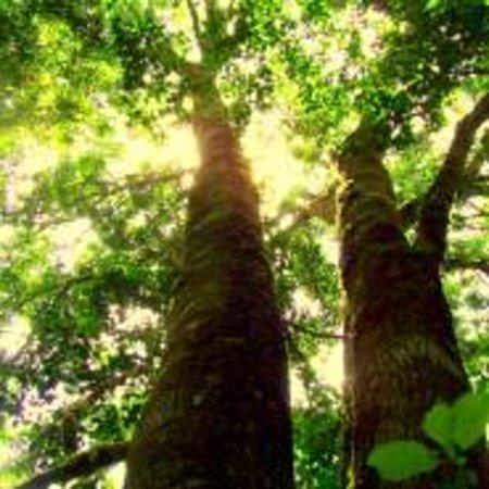 Foto de Peace of Eden