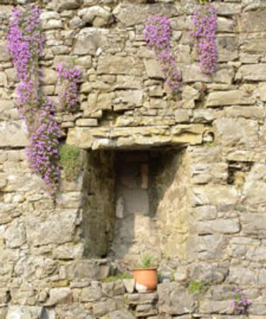 Terryglass, Ireland: Beer Garden wall