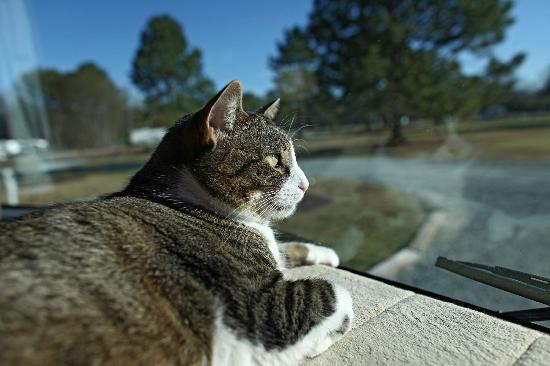 Fayetteville RV Resort & Cottages : Our cat Molly admiring the KOA view
