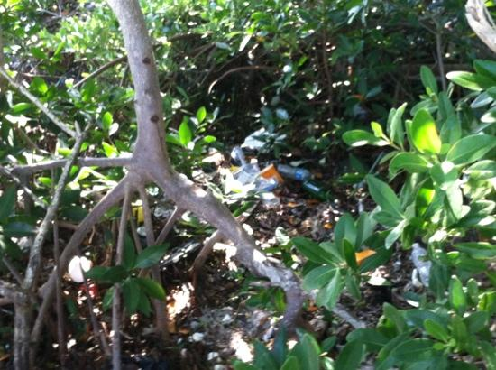 Boyd's Key West Campground: trash all in the bush's
