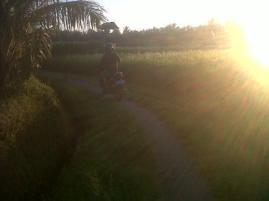 Sawah Sunrise Bed & Breakfast: Trail through rice paddies