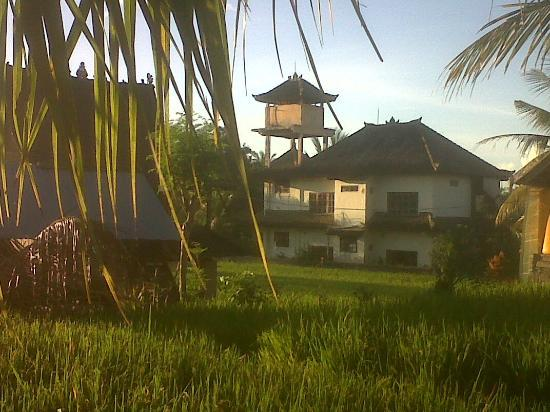 Sawah Sunrise Bed & Breakfast: View from Sawah front gate