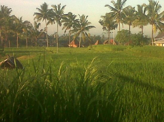 Sawah Sunrise Bed & Breakfast: Surrounding area