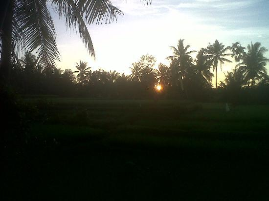 Sawah Sunrise Bed & Breakfast: Sun beginning to rise