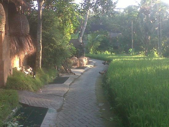 Sawah Sunrise Bed & Breakfast: Walk into Ubud