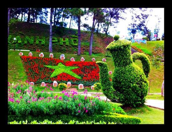 Hoa Sen: very cute topiary