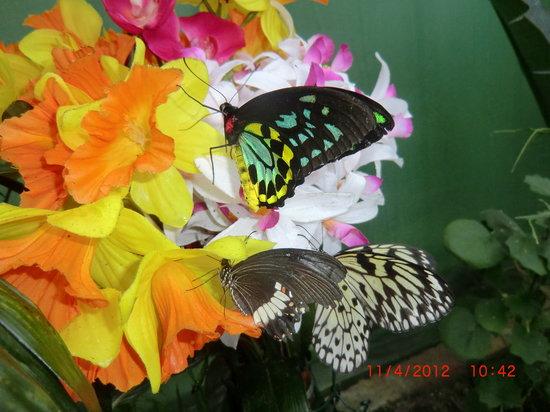 Casa delle Farfalle e Bosco delle Fate di Butterfly Arc: altre farfalle