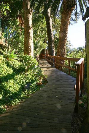 Lezard Bleu: Walkway to Tree House room