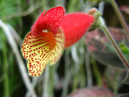 Giardini La Mortella : Un fiore del giardino