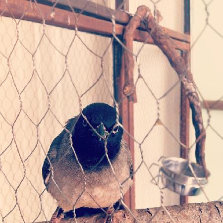 Hayete: The bird
