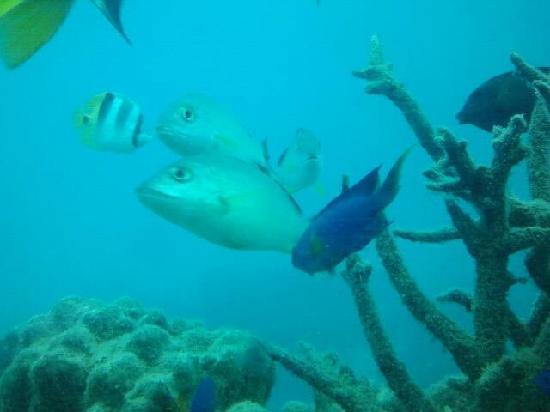 Fish Eye Marine Park: fish