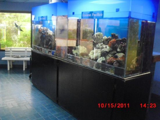 Punta Culebra Nature Center: Smithsonian Culebra Marine exhibit located on the back side of the first island on the Amador Ca