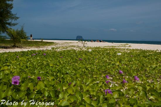 La-ngu Thailand  city photo : Strand Foto di Bulone Resort, La ngu TripAdvisor