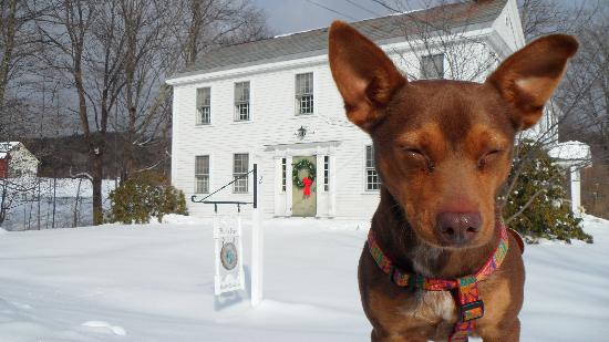 Bird's Nest Bed & Breakfast: Winter picture with Yoda
