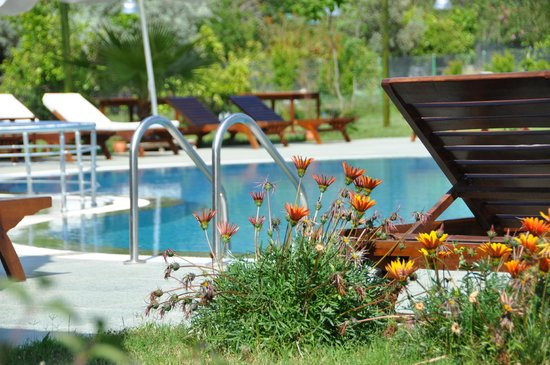 Nerissa Hotel :                                     Nice swimming pool