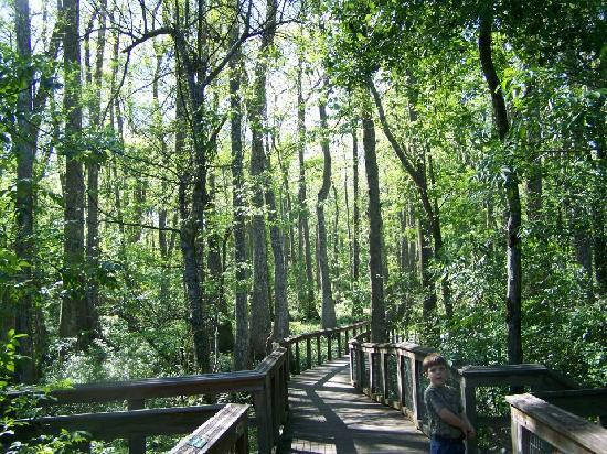 Bluebonnet Swamp Nature Center Baton Rouge
