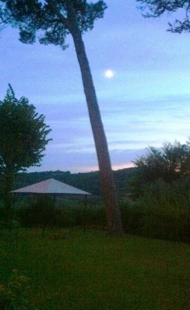 B&B il Giglio Etrusco: panorama dal giardino