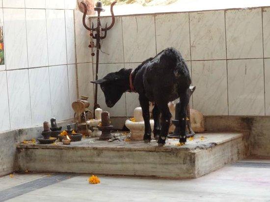 Guwahati, Indie: o/s temple