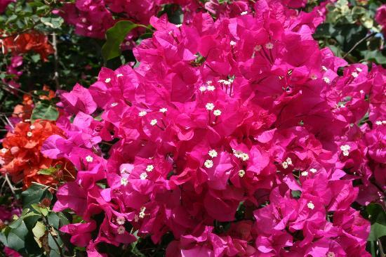 Orchidee Photo De Jardin Botanique De Deshaies Deshaies Tripadvisor