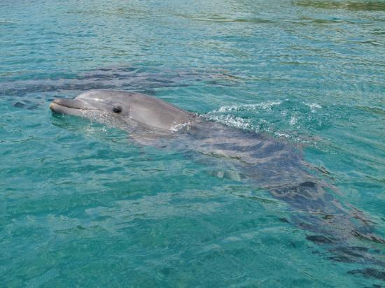 Hotel Prima Music: dolphin reef, 10 minutes walk from hotel