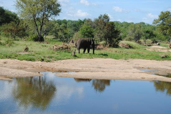 Motswari Private Game Reserve: Ellie visits the river in front of the lodge