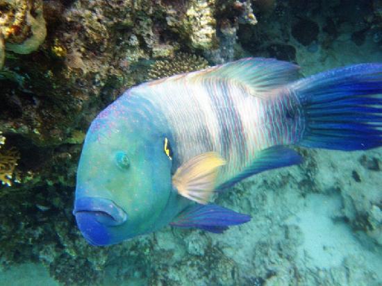 Coral Beach Nature Reserve : coral beach