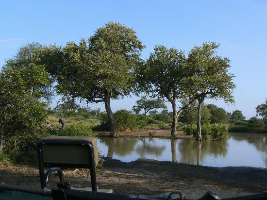 Motswari Private Game Reserve: Beautiful scene, although this used to be a road!