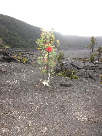 Kilauea Volcano Military Camp 사진