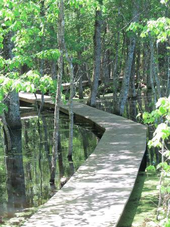 Pee Dee National Wildlife Refuge: A boardwalk into the marsh