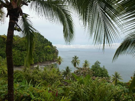 Campanario Biological Station: The view