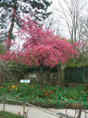 Context Paris Tours : Flowering Tree - Giverny