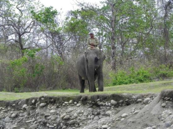 Nameri Eco Camp: FOREST GAURD