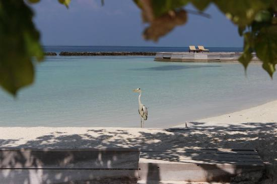 Baros Maldives: White Sands