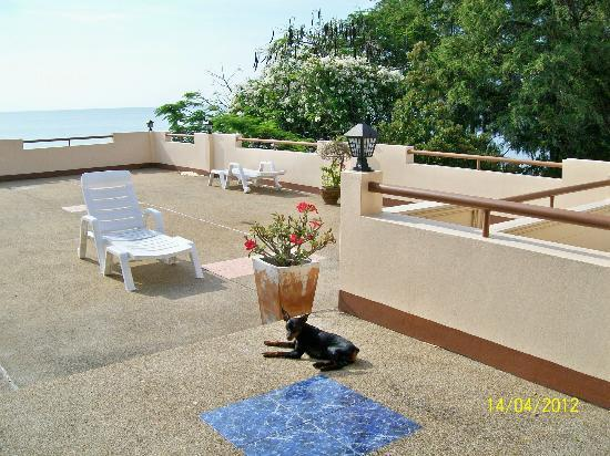 Sea Breeze Guest House: Great views and pet friendly.
