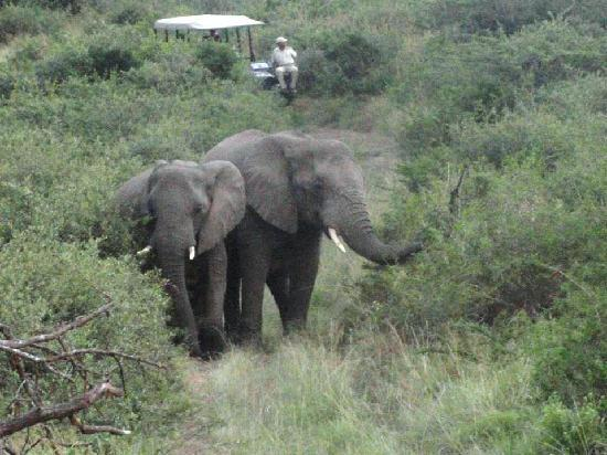 Thula Thula Exclusive Private Game Reserve and Safari Lodge: elephants