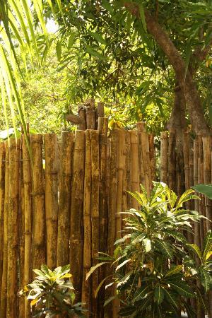 The Jungle House : garden shower