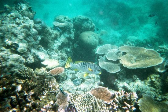 Lizard Island Resort: Reef at your doorstep
